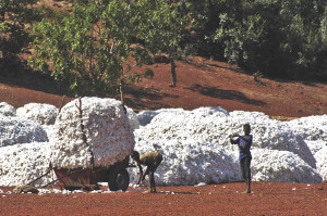 the cotton harvest by children in Burkina Faso